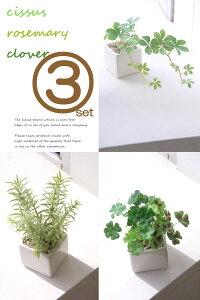 フェイクグリーン セットシサス ローズマリー クローバー デザイン フェイクグリーンインテリアグリーン