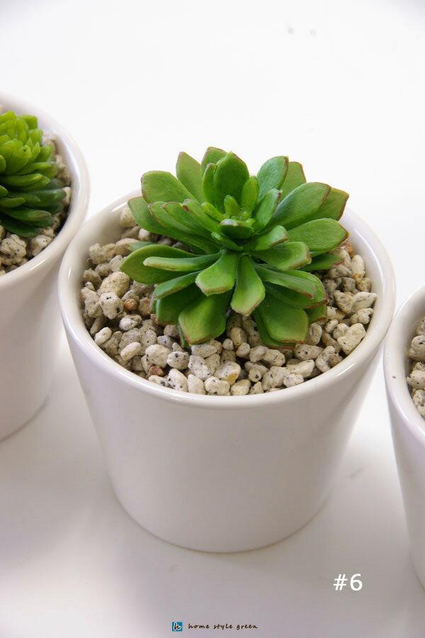 【NEW】ミニミニ鉢と小さい多肉植物#6【造花】【フェイクグリーン】【インテリアグリーン】【人工観葉植物】【北欧雑貨】【インテリア雑貨】【光触媒付】