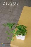 ミニ鉢にシサス鉢のデザイン選択可【造花】【フェイクグリーン】【インテリアグリーン】【人工観葉植物】【鉢植え】【RCP】 05P01Feb15