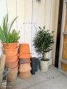 オリーブシャビー鉢付高さ50cm1鉢1鉢違いのある鉢です造花 観葉植物人工観葉植物インテリアグリーンフェイクグリーン光触媒オリーブ