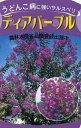 【現品発送】サルスベリ(百日紅)ディアパープル樹高2.1m-2.4m(根鉢含まず)【大型商品・配達日