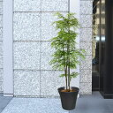 【屋外用・人工植物】アラレア全高1.2m(フェイクグリーン/アウトドアグリーン/造花/人工樹木/人工観葉植物)(野外対応・野外用・屋外対応)
