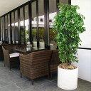【屋外用・人工植物】ベンジャミンG全高1.5m(フェイクグリーン/アウトドアグリーン/造花/人工樹木/人工観葉植物)(野外対応・野外用・屋外対応)
