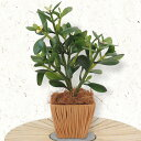 ショッピンググリーン 人工観葉植物 全高33cm 金のなる木 五円玉付き クラッスラ カゲツ 人工樹木 造花 フェイクグリーン インテリアグリーン オブジェ ディスプレイ 装飾
