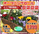 季節の花苗セット おまかせ12鉢【福袋 ...
