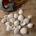 【シェルパーツ】ちっちゃな白い貝がら《ホワイト》【(8g) ビーズアンドパーツ アクセサリーパーツ】