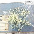 【ドライフラワー】ちっちゃなカスミ草《レモンイエロー》レジン かすみ草 アクセサリー パーツ 素材 材料