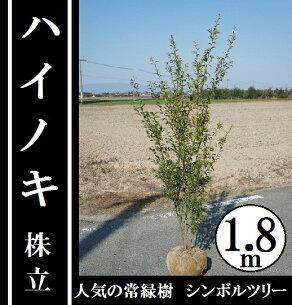 シンボル ハイノキ