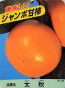 収穫 かき【果樹苗 ジャンボ甘柿(太秋)】