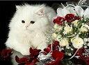 ししゅう糸 DMC糸 クロスステッチ刺繍キット 薔薇花束と白猫 (14CT 白地 図案印刷なし)