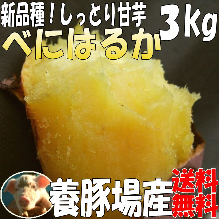 紅はるか【3kg→5kg】
