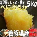 蜜芋!リピートにオススメ!しっとり甘いも紅はるか!たっぷり5kg(べにはるか)送料無料☆養豚場が良質な堆肥をふんだに使用し栽培したさつまいも☆千葉県産さつま芋5キロ(土付)焼き芋(焼いも)やき芋にオススメ!
