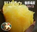 3箱まで送料同一☆紅はるか蜜芋!しっとり甘いもべにはるかSサイズ5kg☆養豚場が良質な堆