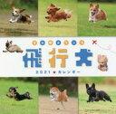 カレンダー '21 飛行犬