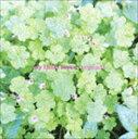 楽天ぐるぐる王国 楽天市場店《送料無料》My Little Lover/organic(廉価盤)(CD)