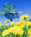 5.1ch SURROUND SOUND virtual trip 花 Flowers 四季の山野草と高山植物(Blu-ray)