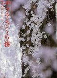 サクラ・さくら・桜 写真集