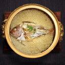 ショッピング炊飯器 鹿児島県長島町産 炊飯器に入れるだけ! 簡単鯛めしセット2合用