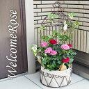 (送料無料) コルダーナローズ 鳥カゴアレンジ ミニ薔薇の寄せ植え バスケット / 母の日・ギフト・プレゼント【ブラウン】