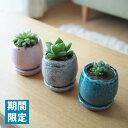 (期間限定) 現品発送 選べるこだわりの植木鉢! ハオルシア 3号 陶器鉢アレンジ / 多肉植物・ハオルチア