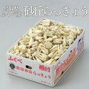 根付き 砂丘らっきょう  鳥取県産 JA鳥取いなば 福部産 秀品 Lサイズ 約10kg 送料