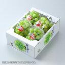 桃太郎ぶどう 岡山県産 香川県産 赤秀 3~5房 約2kg 送料無料 ぶどう 葡萄 ブドウ