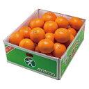 ショッピング紅マドンナ みかん あまくさ 天草 紅まどんなの親品種 〇等級 2L〜Sサイズ 5kg JAえひめ中央 中島産 蜜柑 ミカン