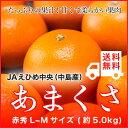 JAえひめ中央(中島産)『あまくさ』(紅まどんなの親品種) 赤秀 Lサイズ(約5.0kg) 【送料無料】