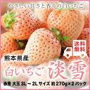 【送料無料】熊本県産 白いちご 『淡雪』(あわゆき) 3L〜2Lサイズ (約270g×2パック)