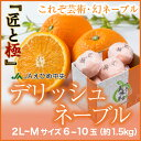 送料無料 JAえひめ中央(中島産) 幻のネーブルオレンジ 『デリッシュネーブル』『匠と極』 2L〜Mサイズ 6〜10玉(約1.5kg)
