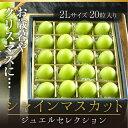 シャインマスカット ジュエルセレクション 岡山県産 特秀 2Lサイズ 20粒 お歳暮 送料無料 葡萄 ぶどう ブドウ