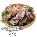 殻付き牡蠣 3kg お歳暮 ギフト 送料無料