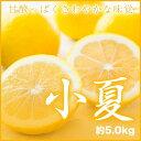 【送料無料】高知県産 JAとさし 『温室完熟・小夏』 秀品 大玉 3L〜2Lサイズ (約5.0kg)  こなつ