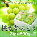 【送料無料】岡山県産 『桃太郎ぶどう』 大粒 大2房 (約500g×2) 化粧箱入り