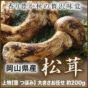 国産松茸 岡山県産 秀品 上物 つぼみ 大きさお任せ 約200g  送料無料 松茸 マ