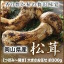 岡山県産『松茸』【つぼみ 開き】大きさお任せ(約300g)