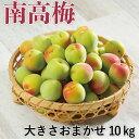 紀州 南高梅 和歌山県産 秀品 大きさおまかせ 約10kg 送料無料 梅 青梅 生梅