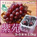 岡山県産 『紫苑』 風のいたずら 3〜5房 (約2.0kg) 化粧箱入り (ちょっと訳あり)