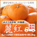【送料無料】JAえひめ中央(中島産)『麗紅』(せとかの姉妹品種) ちょっと訳あり 大きさおまかせ(約5.0kg)