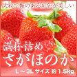 岡山県産 『いちごの満杯詰め』 (さがほのか) L〜3Lサイズ 約1.5kg