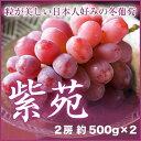 岡山県産 『紫苑』 2房 (約500g×2) 化粧箱入り