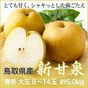【送料無料】 鳥取県産 JA鳥取 『新甘泉』(しんかんせん) 青秀 大玉 8玉?14玉(約5.0kg