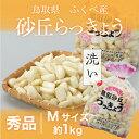 砂丘らっきょう 鳥取県産 JA鳥取いなば(福部産)秀品 Mサイズ 約1kg 洗い 送料無料