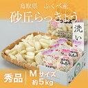 砂丘らっきょう 鳥取県産 JA鳥取いなば(福部産)秀品 Mサイズ 約5kg 洗い 送料無料