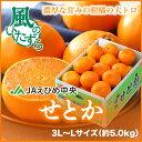 【送料無料】JAえひめ中央(中島産) 『せとか』 (ちょっと訳あり) 大玉 3L〜Lサイズ (約5.0kg)