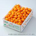 たまたま 完熟きんかん 宮崎県産 秀品 特大玉 3L 約3kg 送料無料 金柑 キンカン ギフト 柑橘