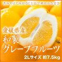 愛媛県産 『和製グレープフルーツ』 秀品 大玉 2Lサイズ(7.5kg)
