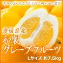 【送料無料】 愛媛県産 『和製グレープフルーツ』 秀品  Lサイズ  (約7.5Kg)