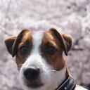 犬 首輪 柔らかい ワンタッチバックル(プラスティック) Basic/BB 肉球付ブラックベース 16mm幅 犬の体重=5kgまで 犬 首輪 ナイロン(小型犬用)