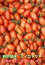 ☆楽天市場オープンセール☆ 熊本県産 アイコトマト 3kg 美味しいミニトマトを産地直送